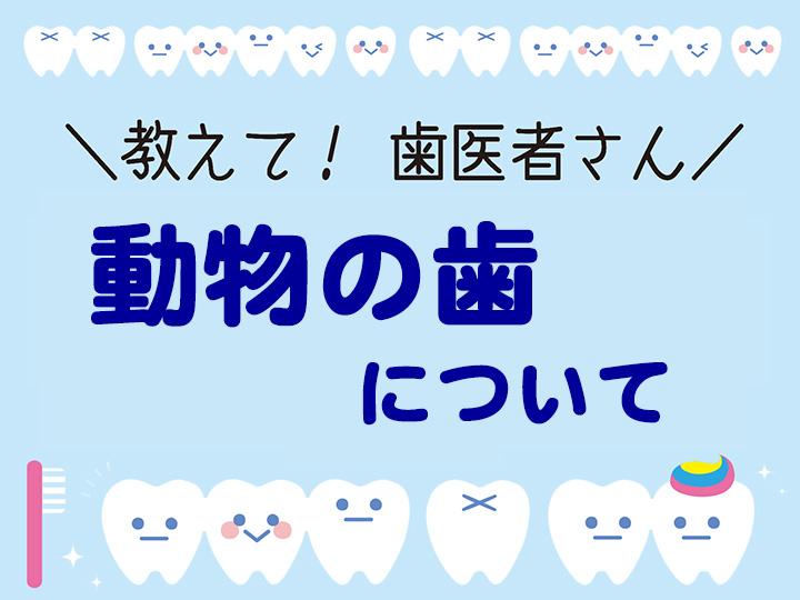 動物の歯について